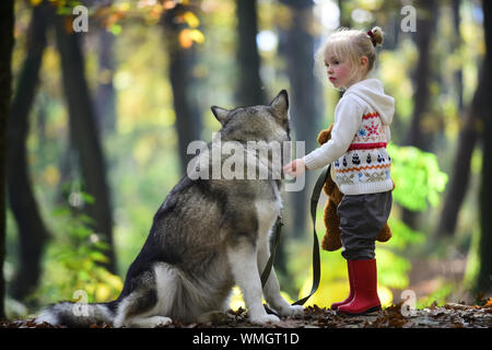 Red riding hood with wolf in fairy tale woods. Little girl with dog in autumn forest. Childhood, game and fun. Activity and active rest. Child play - Stock Photo