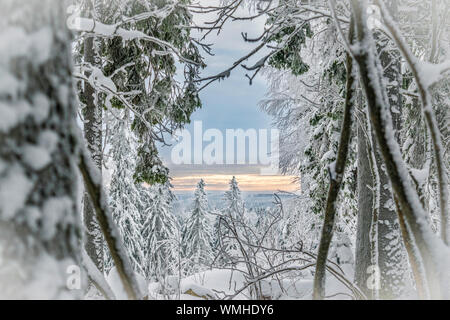 Close-up Of Frozen Tree Against Sky During Winter - Stock Photo