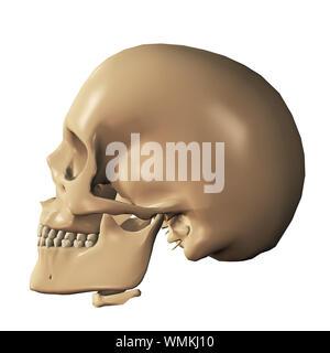Body part, 3d human skull digitally rendered illustration. - Stock Photo