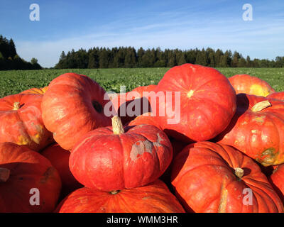 Stack Of Pumpkins On Field Against Sky - Stock Photo
