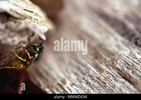 Close-up Of Wasp On Wood - Stock Photo