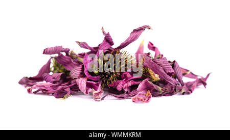 Dried Echinacea flowers, isolated on white background. Medicinal herbs. - Stock Photo