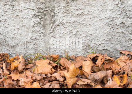Orange autumn leaves background. Colorful backround of fallen autumn leaves for seasonal use. Dry maple leaves lie on the ground. Space for text. - Stock Photo