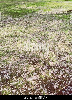 High Angle View Of Moss Covered Field - Stock Photo