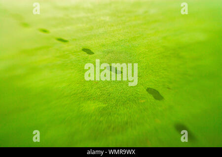 Footsteps on a golf course dew covered manicured grass lawn, Stowe Vermont, USA - Stock Photo