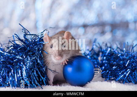 New Year concept. Cute white domestic rat in a New Year's decor. Symbol of the year 2020 is a rat. Gifts, toys, garlands, Christmas tree branches - Stock Photo