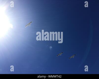 Low Angle View Of Birds Flying Against Blue Sky - Stock Photo