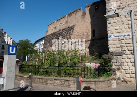 Inner city vineyard at the Severinstor in Cologne, Germany. - Stock Photo