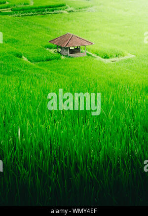 High Angle View Of Green Fields - Stock Photo