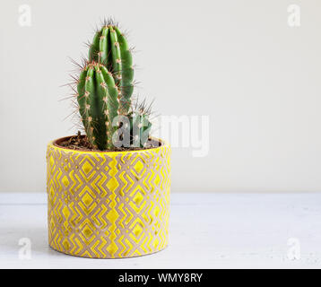 Cactus plant in a yellow pot on a white table, with copy space - Stock Photo