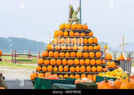Stack Of Pumpkins Against Clear Sky By Farm - Stock Photo