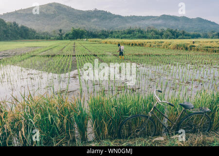 Scenic View Of Rice Field Against Sky - Stock Photo