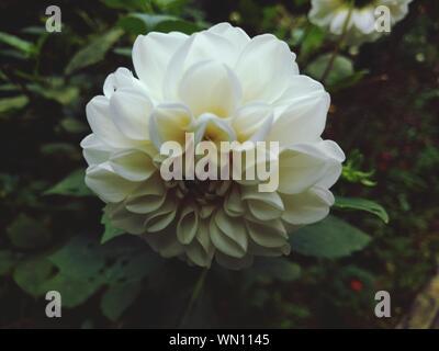 Macro Shot Of White Flower - Stock Photo