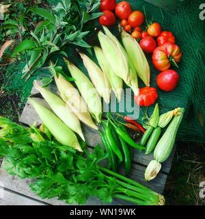 High Angle View Of Various Vegetables - Stock Photo