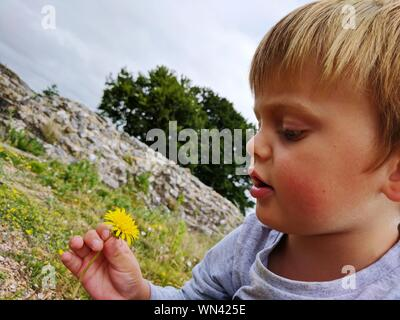 Close-up Of Cute Boy Holding Yellow Dandelion - Stock Photo