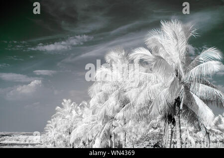 Digital Composite Image Of White Palm Trees Against Sky - Stock Photo