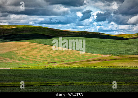 Sunlight breaking through the clouds onto winter wheat fields in the Palouse near Colfax, Washington - Stock Photo