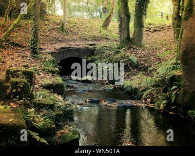 Stream Flowing Through Small Arch In Forest - Stock Photo