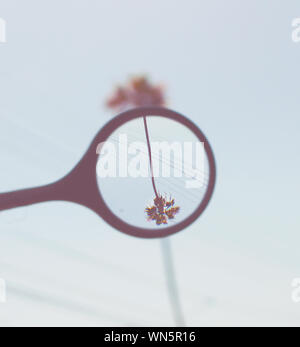 Digital Composite Image Of Upside Down Palm Tree Seen Through Magnifying Glass - Stock Photo
