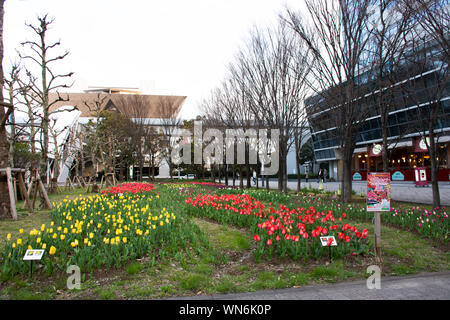 Tulips flower in garden at front of tokyo big sight for Japanese people and foreign travelers visit and take photo at Koto city on March 31, 2019 in T
