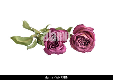 Flowers composition, two red roses and green leaves on white background isolated close up, border for greeting card, design element for poster, print - Stock Photo