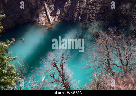 Himalayan firs (Abies spectabilis) and Himalayan spruce (Picea morinda) in water. Amazing flooded forests. Trees rise from lake, deluge. Unusual Himal - Stock Photo