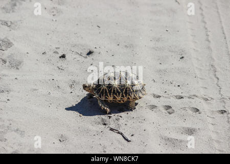 Turtle Walking On Sand - Stock Photo