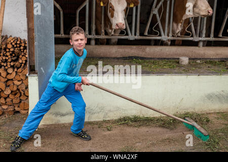 Boy dressed in blue sweeping the floor in front of a cowshed - Stock Photo