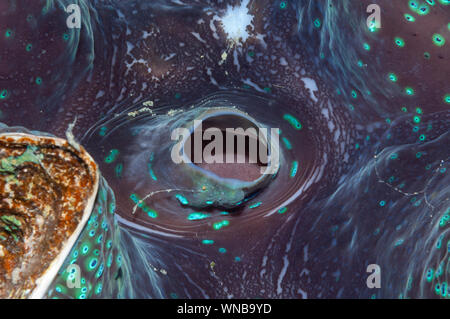 Giant clam abstract macro Philippines - Stock Photo