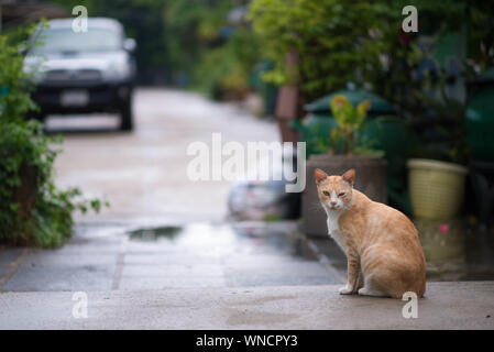 Ginger Cat Sitting In Back Yard - Stock Photo