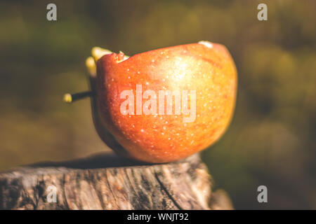 Close-up Of Apple On Tree Stump - Stock Photo