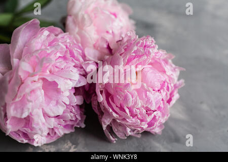 Beautiful pink peony flowers on gray concrete background. Happy mothers day greeting card mockup. International Woman, Teacher Day. Valentines day - Stock Photo