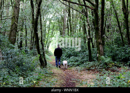 Rear View Of Man With Dog Walking In Forest - Stock Photo