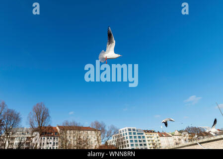 Birds Flying Against Blue Sky In City - Stock Photo