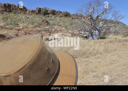 Australian man looking at a Boab tree growing in Kimberly Region outback of Western Australia . - Stock Photo