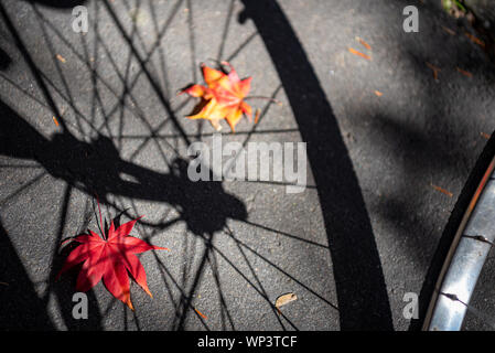 Shadow of a bicycle wheel with autumn fallen leaves on the ground. close-up, top view from above, beautiful seasonal backgrounds. A road trip concept - Stock Photo