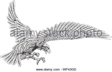 Swooping eagle - Stock Photo
