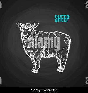 Animal sheep in the style of chalk on a blackboard. Vector illustration of farm animal - Stock Photo