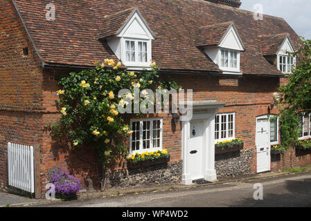Yellow climbing rose on an old cottage - Stock Photo