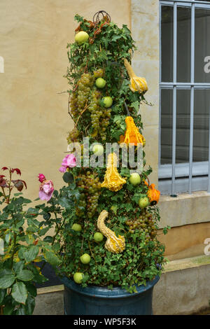 Apples, grapes, pumpkins hanging on ivy in a garden - Stock Photo