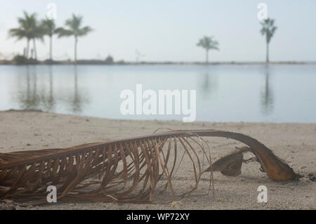 Morning view of atoll pool (an artificial lagoon) in the Matheson Hammock county park in Miami, Florida, USA - Stock Photo