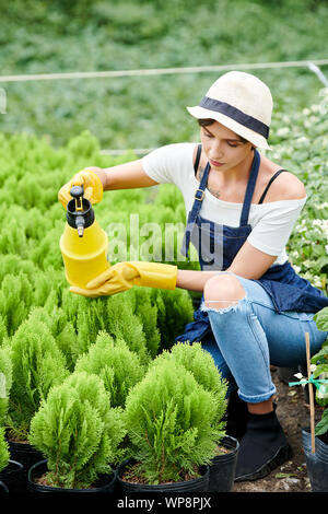 Female gardening worker concentrated on spraying water on small cypress plants - Stock Photo