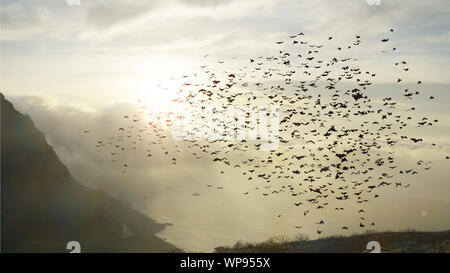 large group of flying bats, mega bats in the sky - Stock Photo