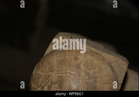 close up of a hairy, long leg brown spider sitting on wood. - Stock Photo