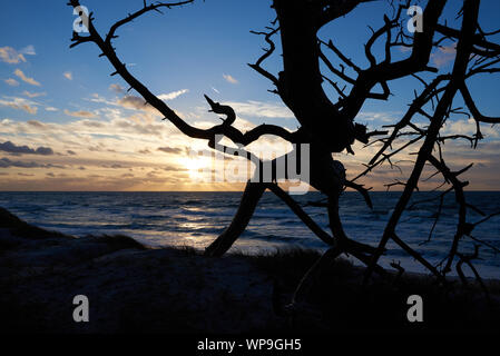 Silhouette Of A Fallen Tree - Stock Photo