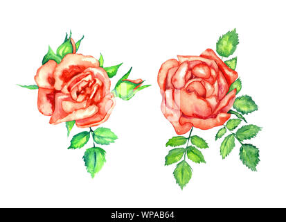 Two red roses with green leaves and buds, isolated hand painted watercolor illustration design element for invitation, card, print, posters, patterns - Stock Photo
