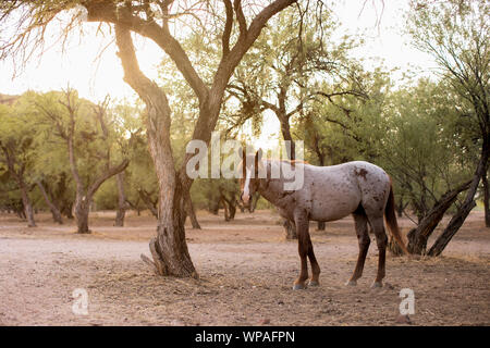 Wild Horse in the desert forest - Stock Photo