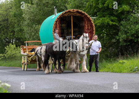 Bow Top Gypsy caravan pulled by two horses followed by a flat bed cart, travelling down Mallerstang on the way to Appleby horse fair. UK. - Stock Photo