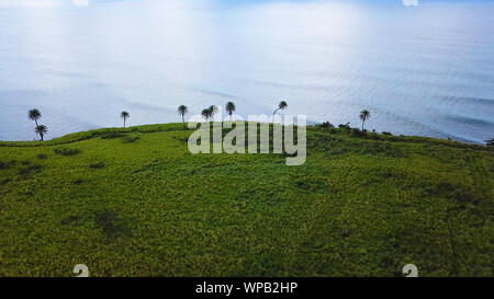 Aerial view of sugar cane fields on the coast of St Kitts. - Stock Photo
