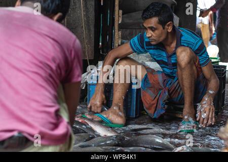 Fisherman cleaning fish after selling fish at Local fish market in Bangladesh, life style street photo of rural urban Bangladesh hilsha ilsha padma